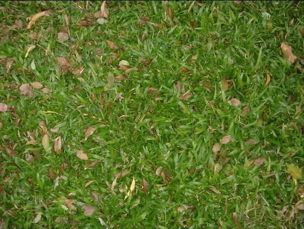草很绿最新文章